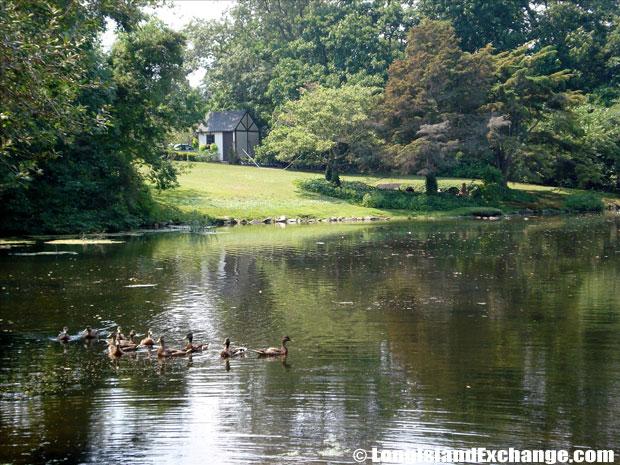 Blue Point Duck Pond