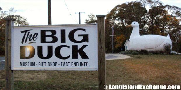 Flanders Big Duck