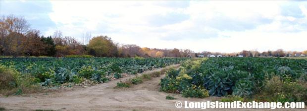 Jamesport Farmland