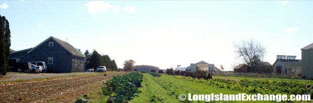 Laurel Farmland