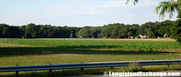 Manorville Densieski Farmland