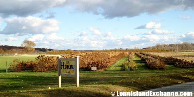 New Suffolk Honey Farm