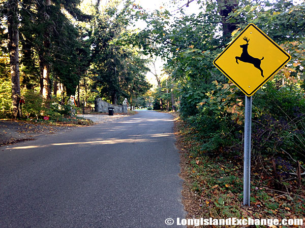 Crossing Deer