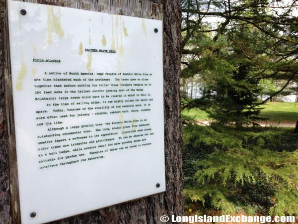 Bayard_Cutting_Arboretum5