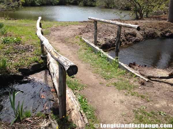 Bayard_Cutting_Arboretum922