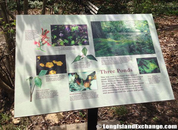 Bayard_Cutting_Arboretum933