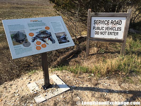 Orient Beach State Park Turtles