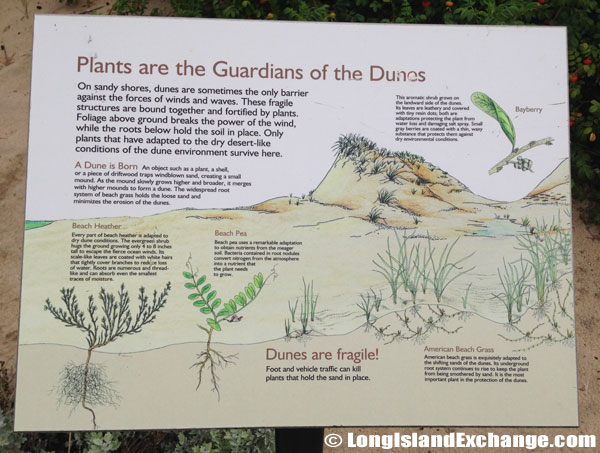 Plants Guardians Dunes