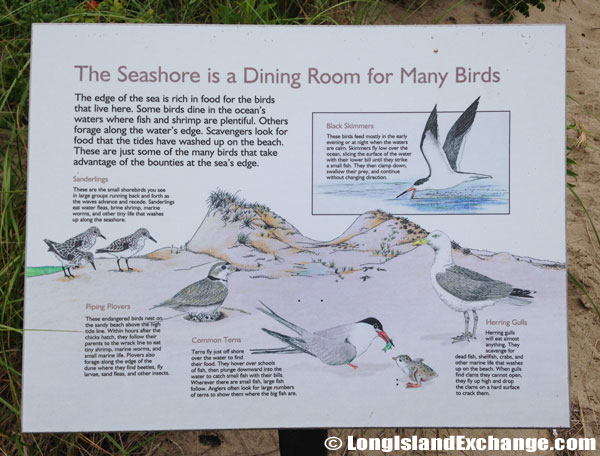 Seashore Dining Room Birds