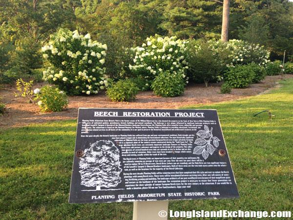 Beech Restoration Project