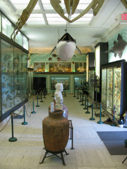 Vanderbilt Marine Museum, first floor. Photo Credit: Vanderbilt Museum.